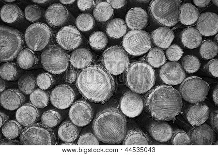 Cutted Wood In Monochrome