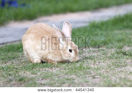 The Brown Rabbit To Eating.