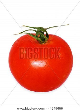 Fresh Vine Tomatos