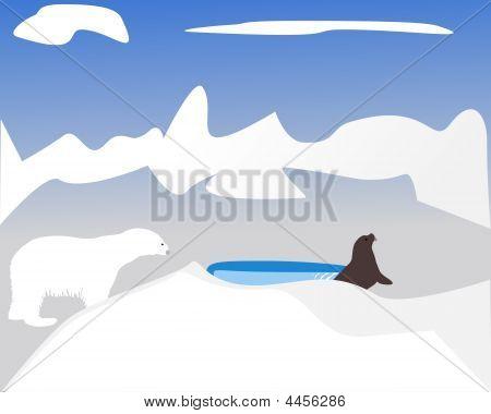Polar Bear Hunting For Seal