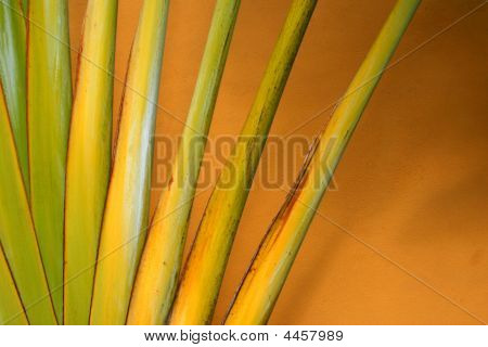 poster of Abstract of a traveler palm on an orange background