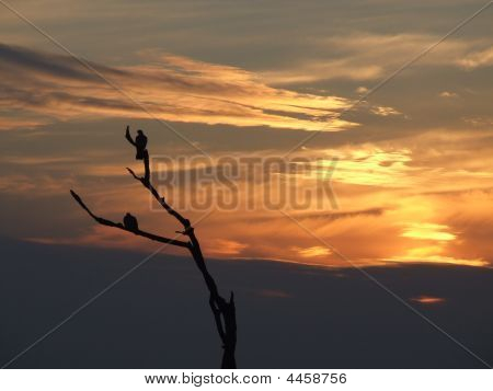 Silhouette Of Birds On A Tree In Sunset