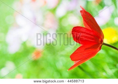 Floral Springtime Tulip