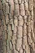 Tree abstract closeup bark texture wooden background poster