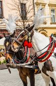 Horses in harness in the Main Square of the Old Town Krakow Poland. poster