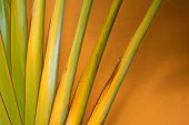 Abstract of a traveler palm on an orange background poster
