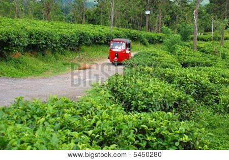 Three-wheeler At The Tea Plantation
