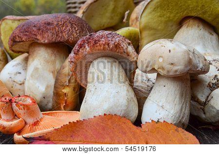 Edible Mushrooms Close Up