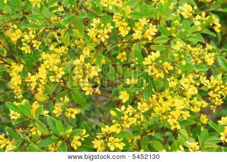 Tiny Splashes Of Yellow