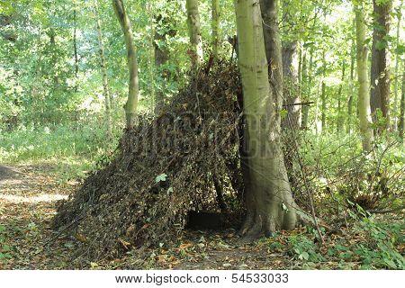 Woodland Shelter.