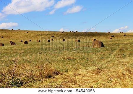 Straw Roll Bale On The Field Of Farmland