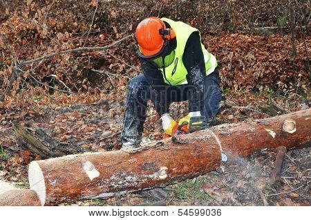 Lumberjack doing his work