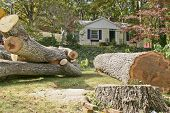 Large heavy branches and trunk of an old oak tree that was cut down fill up a front yard poster
