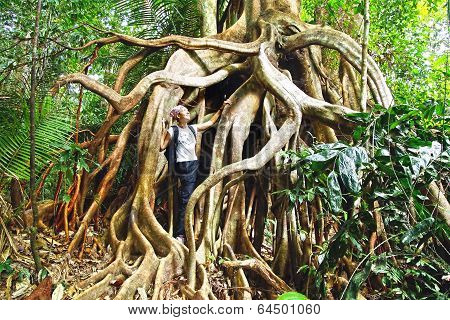 Tropical gigantic tree.