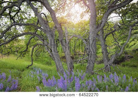 Lupine Wild Flowers Under The Trees