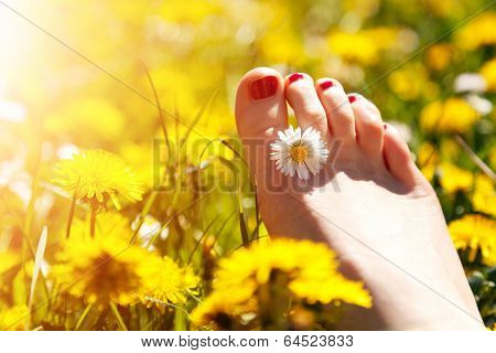 Foot of a young woman with a spring flower in fingers lying on sunny, warm meadow. Happiness, harmony, wellness, relaxation concepts.