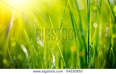 Grass. Fresh green grass with dew drops closeup. Sun. Soft Focus. Abstract Nature Background