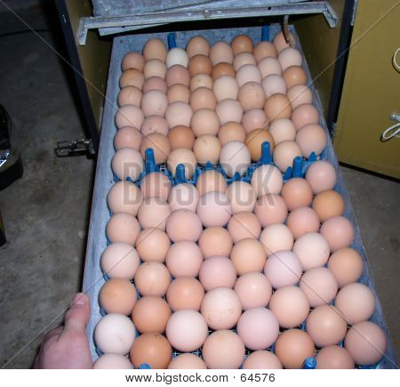 Egg Rack Too