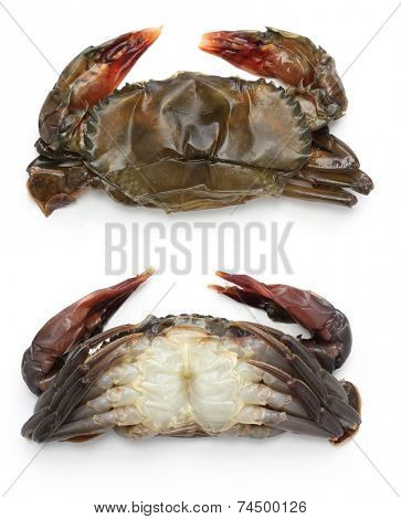 ?raw soft shell crab, front and back views, before cooking
