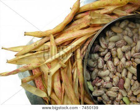 White Kidney Beans Five