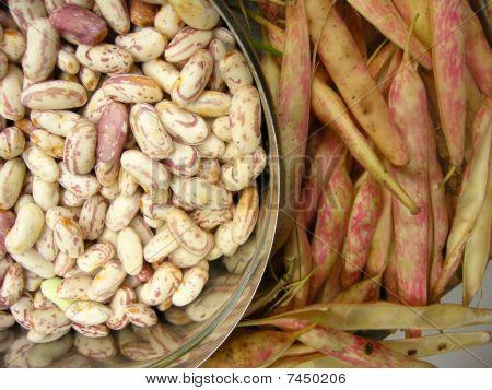 White Kidney Beans Eight