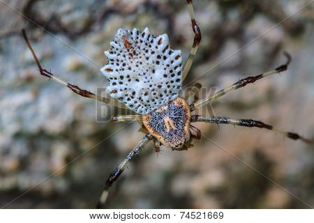 White Spider Is Staying In Web