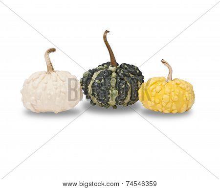 Three Pimply Pumpkins