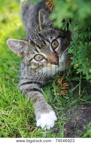 Little domestic cat