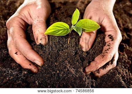 Farmer hands holding a fresh young plant. New life and environmental conservation concept