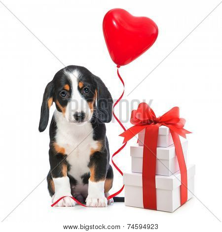 Party dog with gift boxes and balloons. Isolated on white background