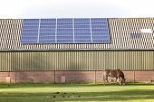 solar panels on roof of agricultural building and grazing horse poster