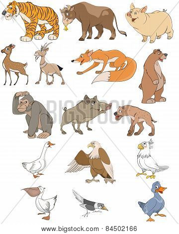 Animals And Birds Set