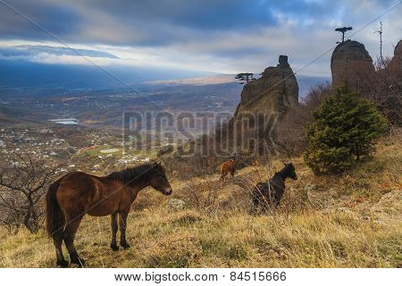 Wild Horses Grazing In The Crimean Mountains.