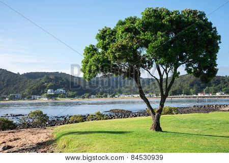 A lonely tree and a view of Paihia from Waitangi beach