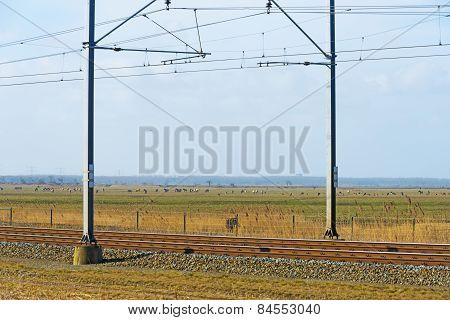 Heck cattle walking along a railroad