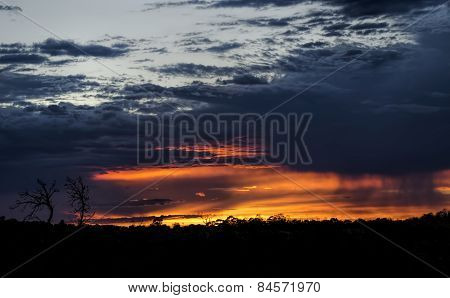 Australian bush at sunrise
