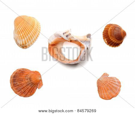 Broken Rapana And Seashells Isolated On White Background