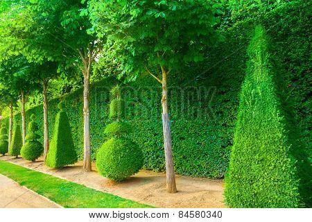 Topiary Trees