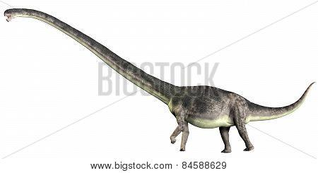 Omeisaurus On White