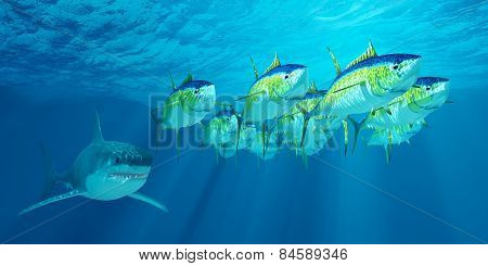 A school of Yellowfin tuna is followed by a Great White shark waiting for his opportunity to strike. poster