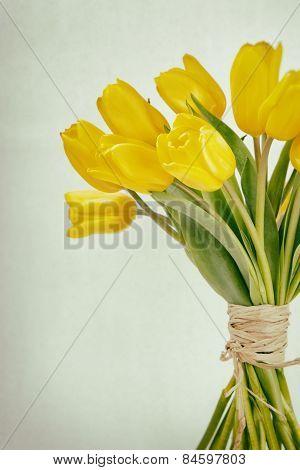 Yellow Tulip Bunch Cross Processed