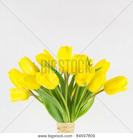 Yellow Tulip Bunch Close Up