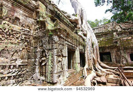 Ta Prohm temple is UNESCO's world heritage in Siem Reap, Cambodia