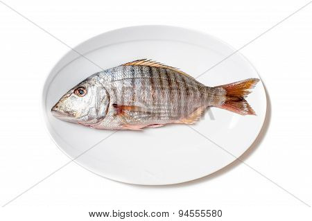 Fresh Raw Striped Sea Bream Murmurs On White Plate
