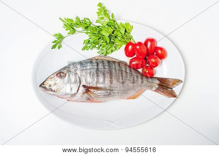 Fresh Raw Striped Sea Bream Murmurs With Parsley And Tomatoes