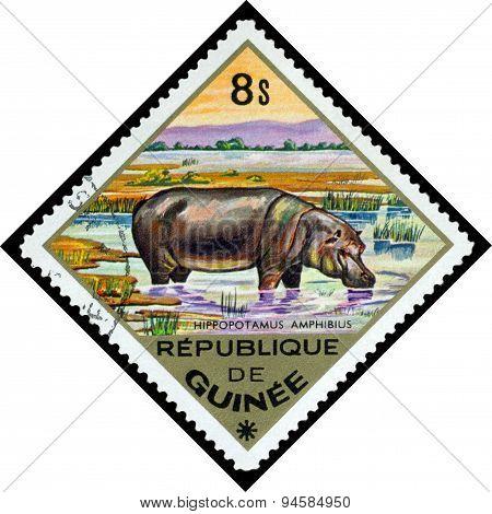 Vintage  Postage Stamp. Hippopotamus To Africa.