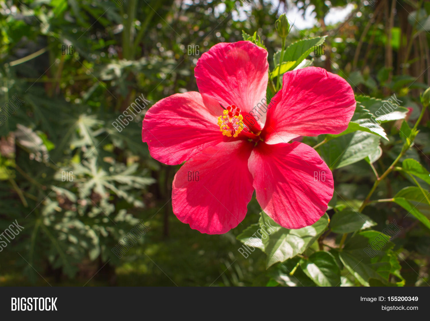 Pink flower on tropical background image photo bigstock pink flower on tropical background bright hibiscus flower on the branch with fresh green leaves izmirmasajfo Choice Image