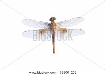 Dragonfly on a white background. dragonfly isolated
