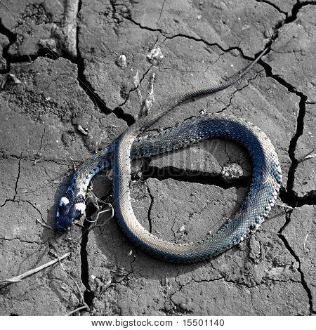 Small dead snake poster