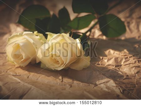 two long stem white roses on crinkled brown paper